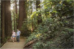 muir-woods-engagement-photography-dana-todd-photography_0050