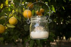 Mason Jars with t-candles in Lemon Trees. By Cinque Terre Wedding: www.cinqueterrewedding.com