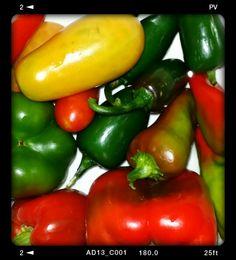 Tomates, Jalapeños, Pimientos Morrones y Cubanelas, cultivados en casa con macetas de dos galones. Aun quedan algunos aspectos de tamaños con los que debo trabajar pero ahi vamos.