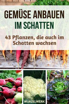 Gemüse anbauen kann man auch im Schatten: Diese 43 Pflanzen werfen auch im Schatten eine dicke Ernte ab. Und Tipps zu allem, was man im Schattengarten beachten muss, gibt's auch noch. :) #Gemüsegarten #Wurzelwerk