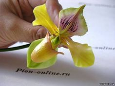 Slipper orchid -part 2