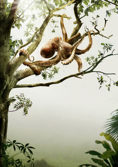 octopus, you are drunk. Get out of that tree!