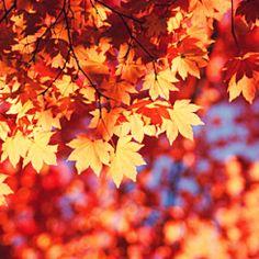 vivid foliage!  #fall #autumn #foliage