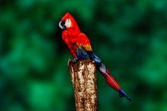ALLPE Medio Ambiente Blog Medioambiente.org : ¿Un loro? No, una mujer posando