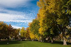 The historic heart of campus, students spend hours playing and studying on the tree-lined Oval.