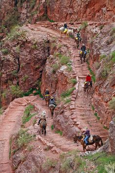 Grand Canyon National Park: Bright Angel Trial Mule Trip 0550 | by Grand Canyon NPS
