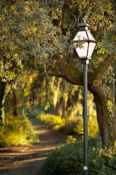 Light Along the Path, Hampton Park, Charleston, SC