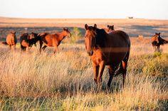 "The Pioneer Woman   by Ree Drummond  ""Miss Mustang 2012"""