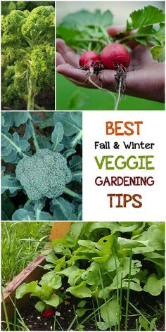 5 Best Fall & Winter Veggie Gardening Tips