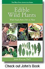Wild Food Adventures - Edible Plant Expertise, Workshops, Publications
