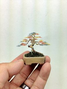 Informal Upright Mame wire bonsai tree by Ken To by KenToArt.deviantart.com on @DeviantArt