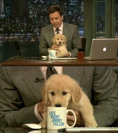 Jimmy Fallon and a puppy...(Refer to name of board)