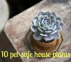 Keeping Your Pets Safe: 10 Non-Toxic House Plants ASPCA | Apartment Therapy