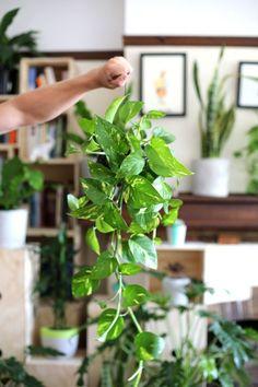 Awesome 20+ Incredible String Garden Ideas https://gardenmagz.com/20-incredible-string-garden-ideas/