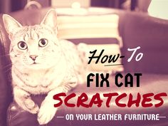 Is Your Cat Using Your Couch As A Scratching Post? How To Fix Cat Scratches  On Your Leather Furniture In 10 Steps. It Might Look Daunting, But Its  Easier ...