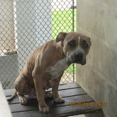 Sebring, Fl Urgents - Please Save Us    30. Juli ·       .   **Deadline Tuesday 8-5 at 4 pm**  **Owner surrendered her and kept her puppies :(** https://www.facebook.com/136510243142818/photos/a.240499019410606.55654.136510243142818/547665318693973/?type=1