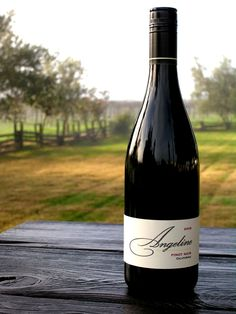 Angeline Pinot Noir, one of my faves Kid Drinks, Party Drinks, Beverages, Some Amazing Facts, Pinot Noir Wine, French Wine, Wine Art, Italian Wine, Holiday Drinks
