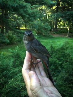 true story about bird feeding from Rick Garvia, from Duncraft Wild Bird Blog