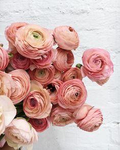 Designs For Garden Flower Beds Ranunculus Addition - Lovely Flowers - Ranunculus Centerpiece, Ranunculus Wedding, Ranunculus Bouquet, Wedding Flowers, My Flower, Pink Flowers, Beautiful Flowers, Cactus Flower, Exotic Flowers