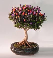 bonsai에 대한 이미지 검색결과