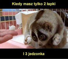 wszystkie memy z neta :v # Humor # amreading # books # wattpad Polish Memes, Funny Mems, Komodo Dragon, Wtf Funny, Best Memes, Funny Animals, French Bulldog, Haha, Kawaii