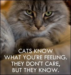 Cats know what you're feeling. They don't care, but they know.
