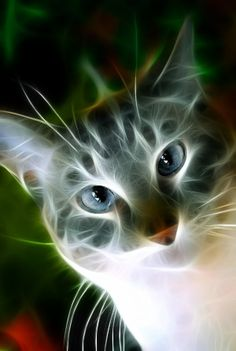 Fractal Cat by Fractal Design, Fractal Art, Illustration Photo, Image Chat, Gatos Cats, Cool Cats, I Love Cats, Warrior Cats, Belle Photo