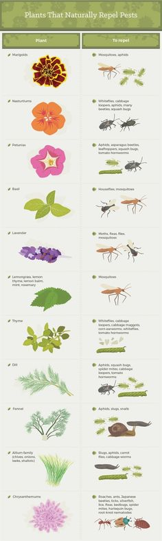 We show you how to protect your garden from annoying pests. There are many simple ways to prevent little animals and bugs from ruining your harvest.  #GardeningTips