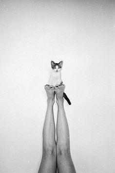 Balancing Act / Girl and a Cat