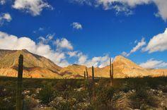 Desierto, Baja California / Desert Landscape @Baja.  Bill Gracey