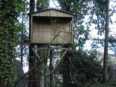 Old Tree House  #Treehouse Pinned by www.modlar.com