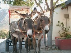 Donkey cart in Montagu, Route 62, Western Cape, South Africa