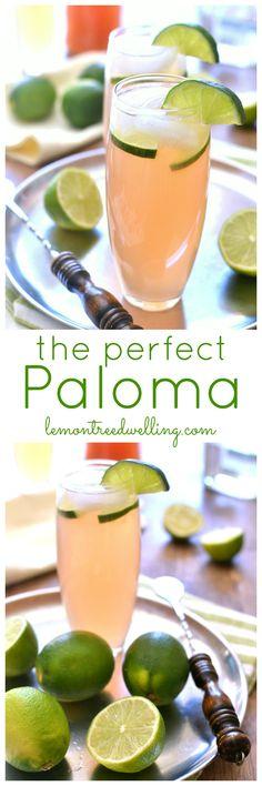 Paloma | Lemon Tree Dwelling