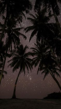 Night, Tree, Palm Tree, Darkness Wallpaper for Android [Full HD], Nature Background and Image Tumblr Wallpaper, Night Sky Wallpaper, Phone Screen Wallpaper, Cute Wallpaper Backgrounds, Pretty Wallpapers, Aesthetic Iphone Wallpaper, Nature Wallpaper, Phone Backgrounds, Aesthetic Wallpapers