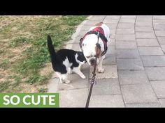 Friendly feline can't get enough of bulldog companion http://j.mp/2sdCMJi