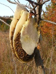 natural bee hives