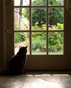 Cat watching garden brow.
