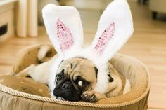 Lauren....Goose needs these for his Easter outfit!