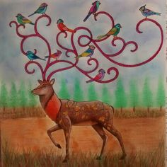 Cervo - floresta encantada