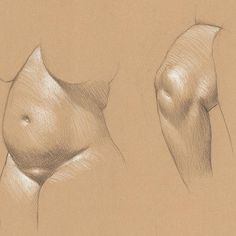 Two Studies of Sake 3B pencil and white Prismacolor pencil on Rives BFK Tan…