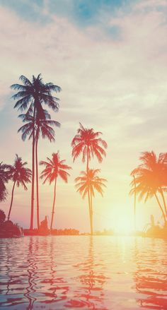 Amazing view of some palm trees with a beautiful sunset in the background Palm Wallpaper, Summer Wallpaper, Nature Wallpaper, Wallpaper Backgrounds, Iphone Wallpaper, Palm Tree Sunset, Palm Trees, Sunset Beach, Palm Tree Pictures