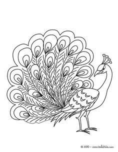 Desenho de um Pav�o deslumbrante para colorir online