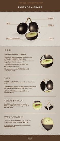 Parts of a grape! #Wine #Infographics