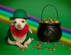 The pot of gold at the end of the rainbow.