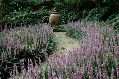 14 Best Liriope Muscari Images In 2014 Landscaping Liriope