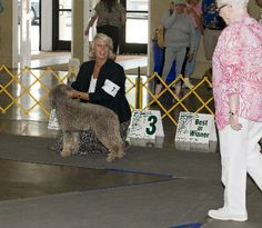 A judge looks at a dog in the show arena.