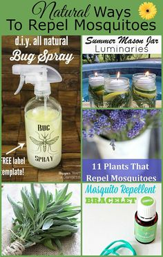 Natural Ways To Repel Mosquitoes Without Bug Spray is part of Mosquito repelling plants - Natural ways to repel mosquitoes without bug spray, including plants that repel mosquitoes, DIY mosquito repellent recipe, and homemade citronella candles