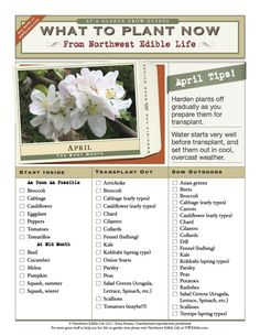 April Gardening Chores For The Pacific Northwest