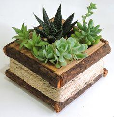 Succulent Gardening, Garden Terrarium, Succulent Pots, Cacti And Succulents, Planting Succulents, House Plants Decor, Plant Decor, Cactus E Suculentas, Driftwood Projects