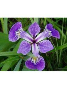 flores hermosas azules - Buscar con Google
